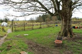 sycamore garden March 2016