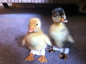 Liametta and Jemima with their leg bandages