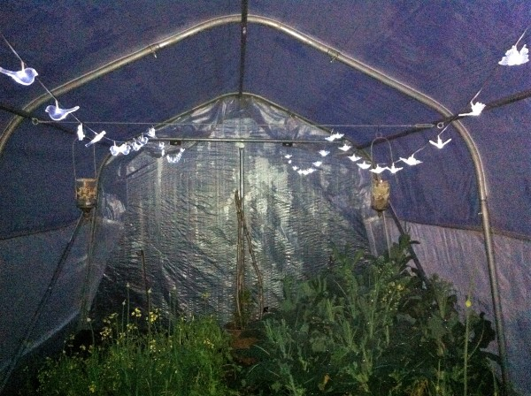 lights in the polytunnel