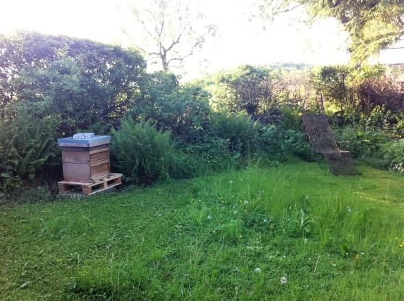 beehive in garden