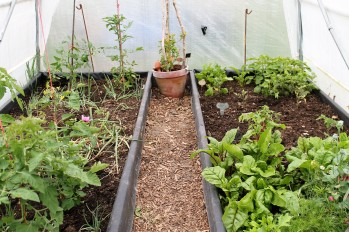 june polytunnel