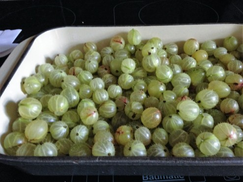 gooseberries toped and tailed