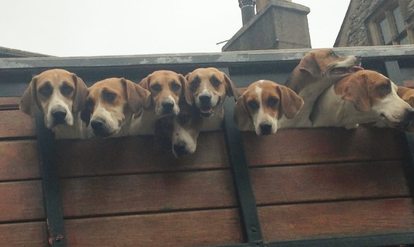 hounds in transit