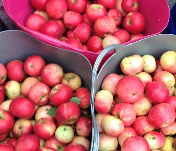 mixed apples