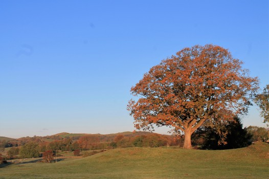 the oak tree in autumn