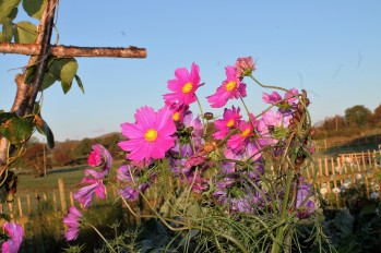 Cosmos in October