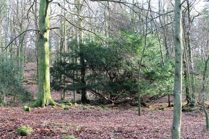 Elleray Wood