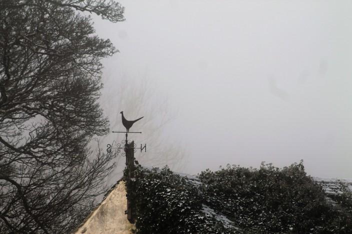 February mist