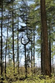 lakeland wood