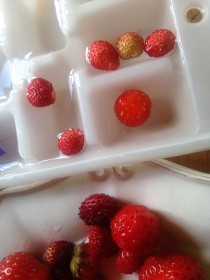 Wild strawberry ice cubes