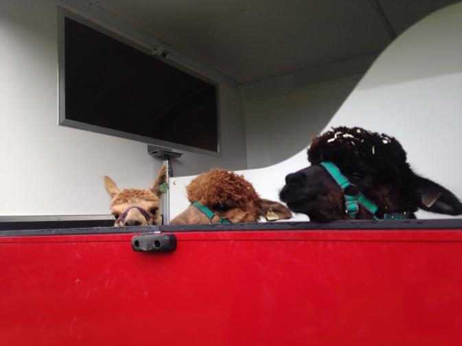 in the horsebox