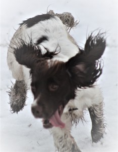 ellie in the snow