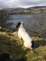 Ellie overlooking Ullswater